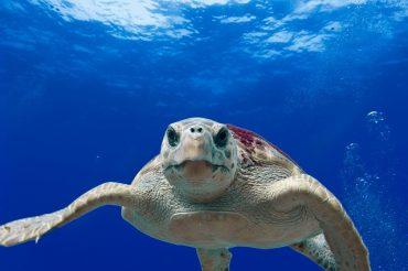 """Ozean Konferenz 8.6.17 — """"Zumindest wird nun darüber geredet"""""""