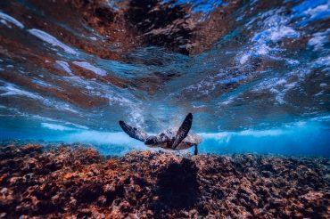 Klima und Meer – Beziehungsstatus: Es ist kompliziert