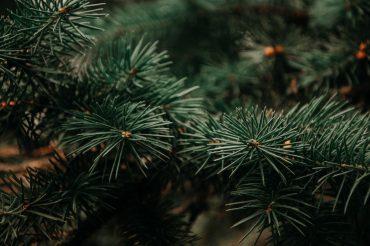 Für grüne Weihnachten – Den Weihnachtsbaum neu denken